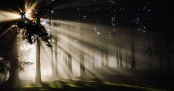 Sun breaking through the trees