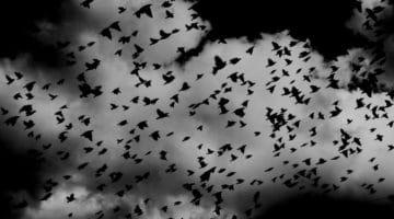 Dark birds.