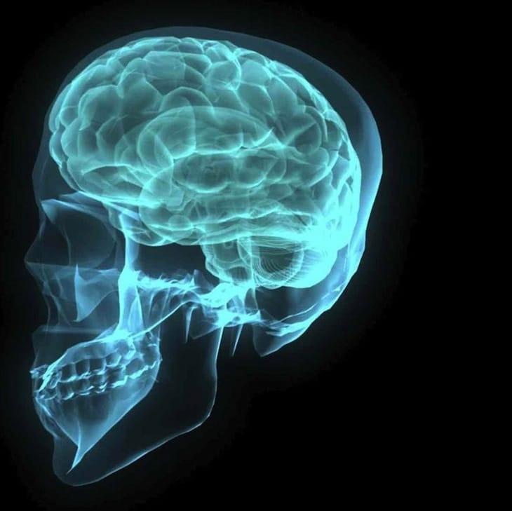 brain, self, no-self, anatta, anatman, Reginald Ray, Reggie Ray, Lion's Roar, Buddhism,