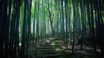 Sekkei Harada Roshi Zazen Zen skandhas Buddhadharma