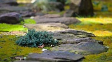 moss_path