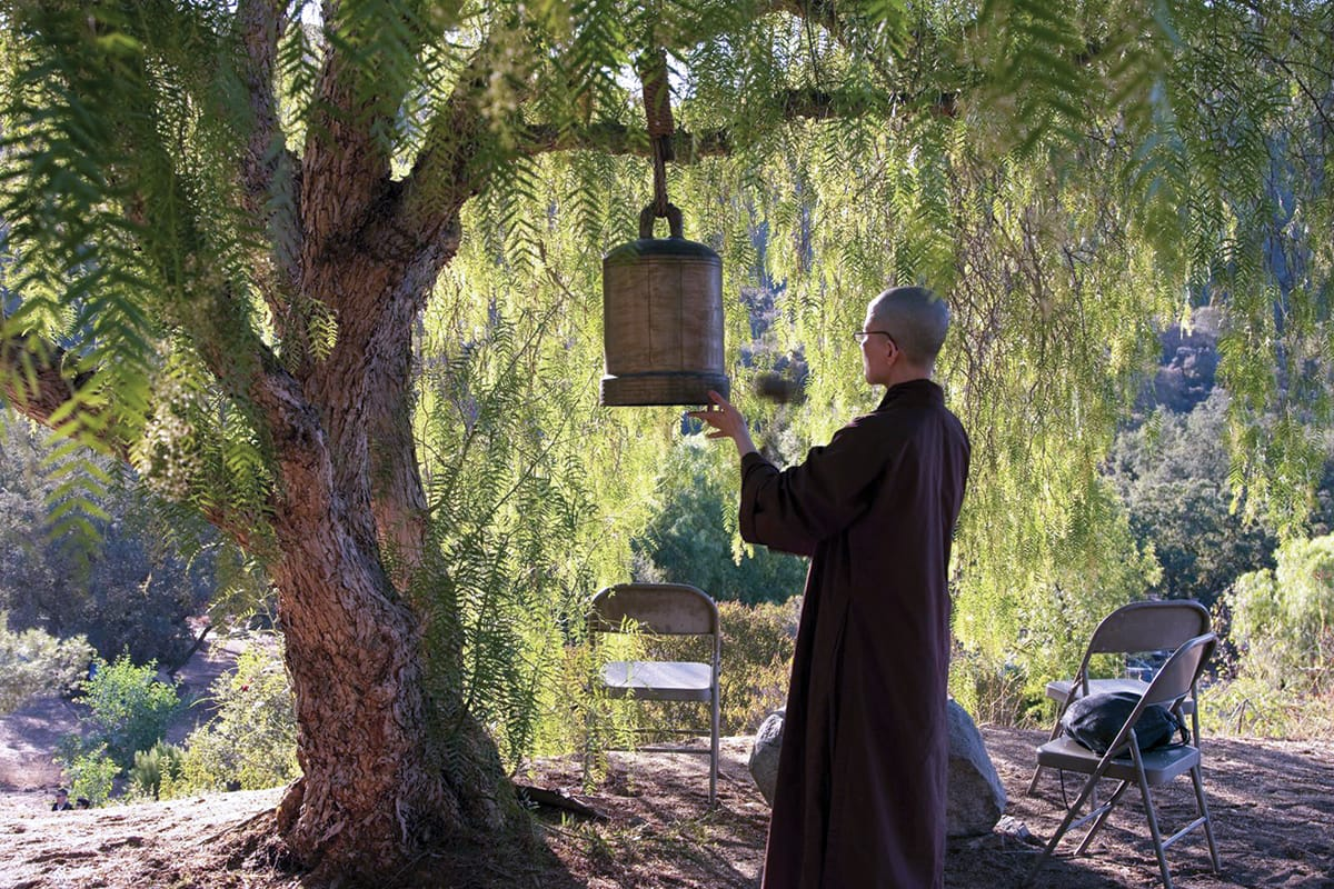 A plum village monastic rings a bell that is hanging in a tree.