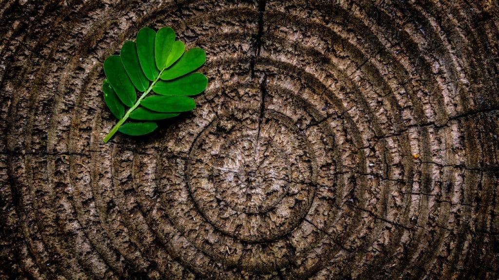 A leaf on a tree stump.