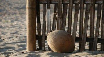 Bombarded by Coconuts Lodro Rinzler Chogyam Trungpa Rinpoche Lion's Roar Buddhism