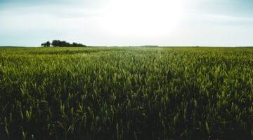 field, grass