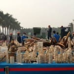 Followup: Hopeful signs in reducing Chinese consumption of illegal ivory
