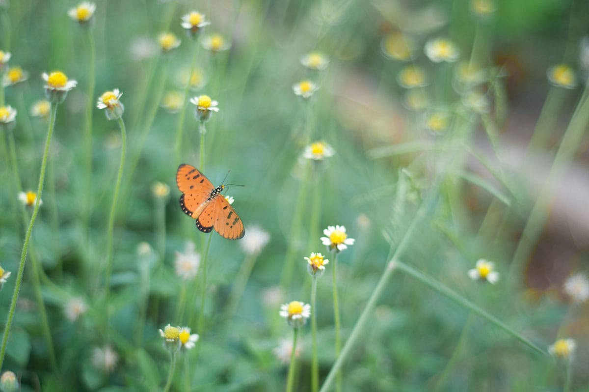 butterfly Sharon Salzberg Getting Started How to Meditate Lion's Roar Buddhism Instruction Posture Breath