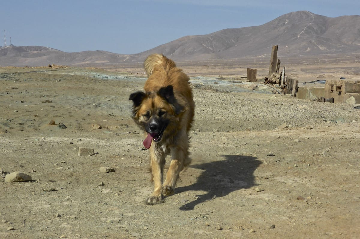 Dog, Gretel Ehrlich, Shambhala Sun, Lion's Roar, Buddhism