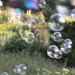 "Watch Sharon Salzberg's ""Bubble Meditation"""