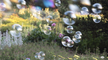 bubble, meditation, lion's roar, sharon salzberg, buddhism