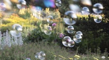 bubble, meditation, lion's roar, sharon salzberg, buddhism