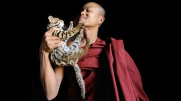 temple, cats, thailand, david wooster, lion's roar, kickstarter, crowdfunding, news