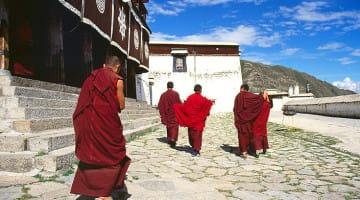 Tibet, Monks, Database, Living Buddha, China, Lion's Roar, News