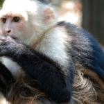 What is Monkey Mind?