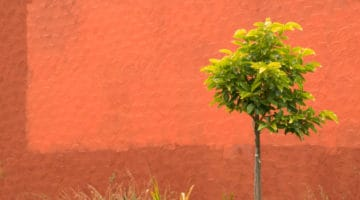 Tree on orange background.