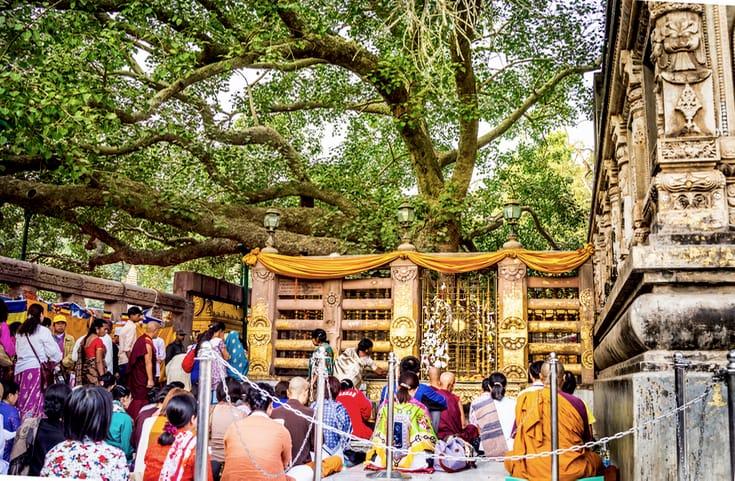 Persone che meditano sotto l'albero della Bodhi a Bodhgaya, India.