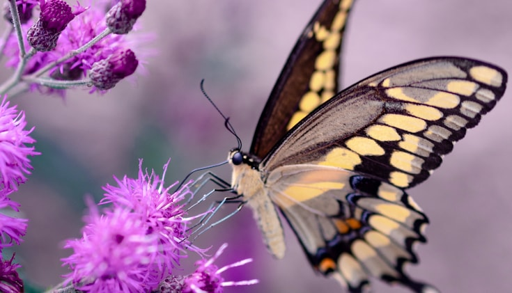 A Butterfly sits on a flower.