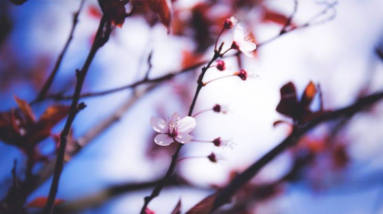 Seasons of Awakening