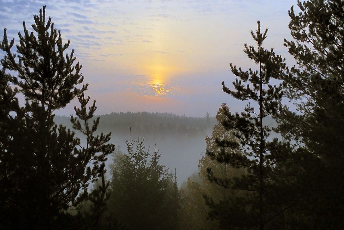 A sun peeking through the clouds, overtop a field of trees.