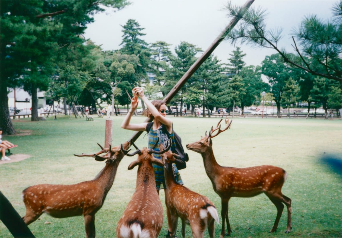 The author feeding deer.