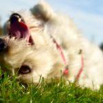 Hush, Puppy!