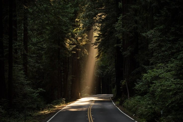 A road on a tree-covered road. There is light peeking through the trees.