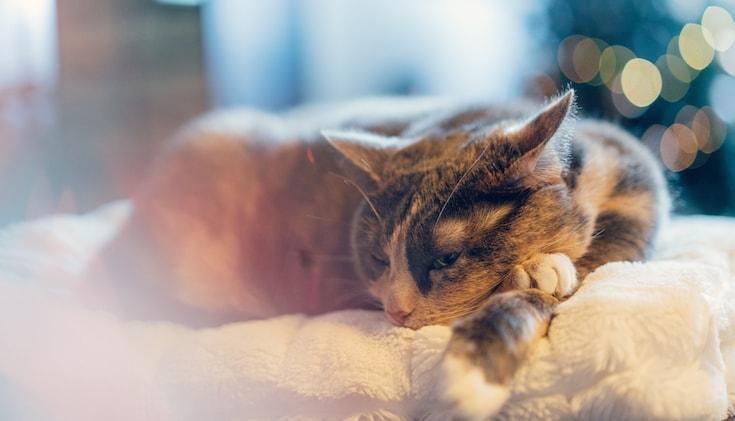 Cat resting.