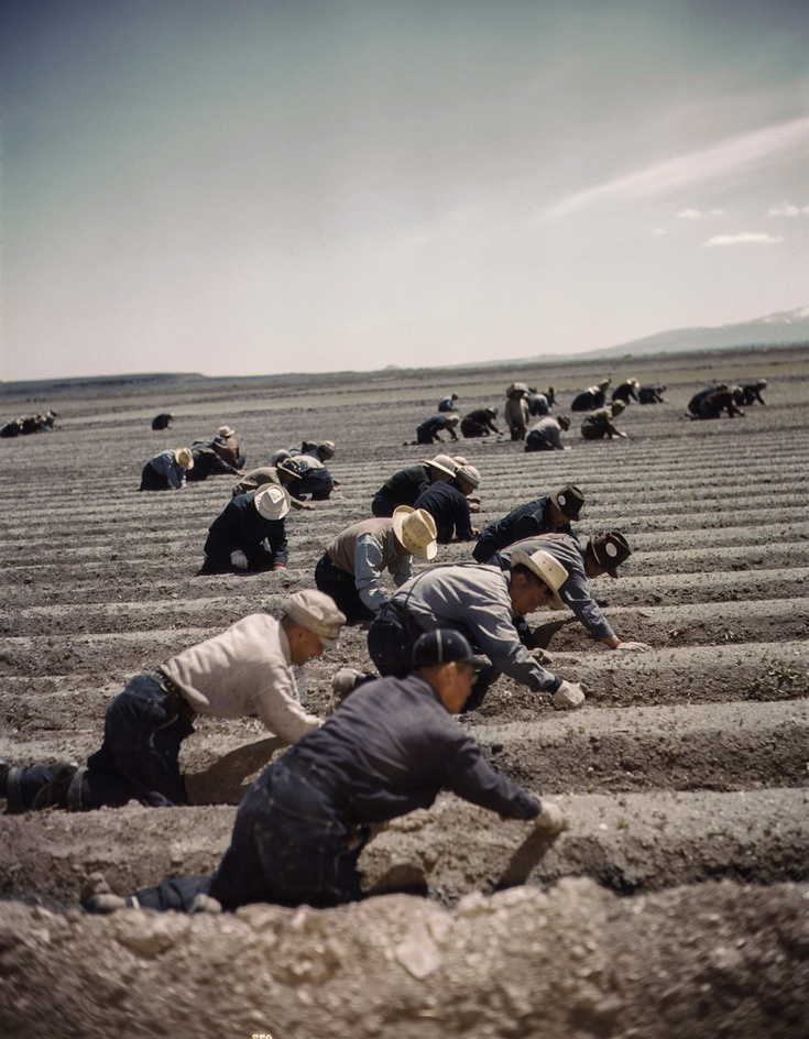 People working in fields. They are all bent on their knees and wearing hats.