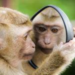Sleepy Mind, Monkey Mind