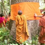 How Buddhist monks are protecting a vulnerable forest from illegal logging in Cambodia