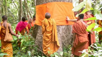 Monks wrapping an orange robe around a large tree