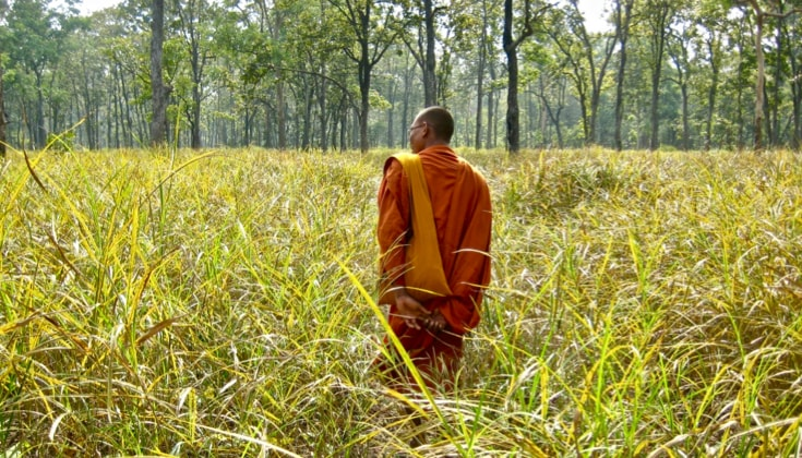 A monk standing in a field