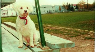 Does My Dog Have Buddhanature?