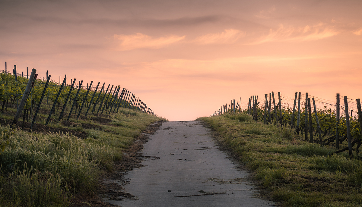A sunset over a path that is surrounded by grass.
