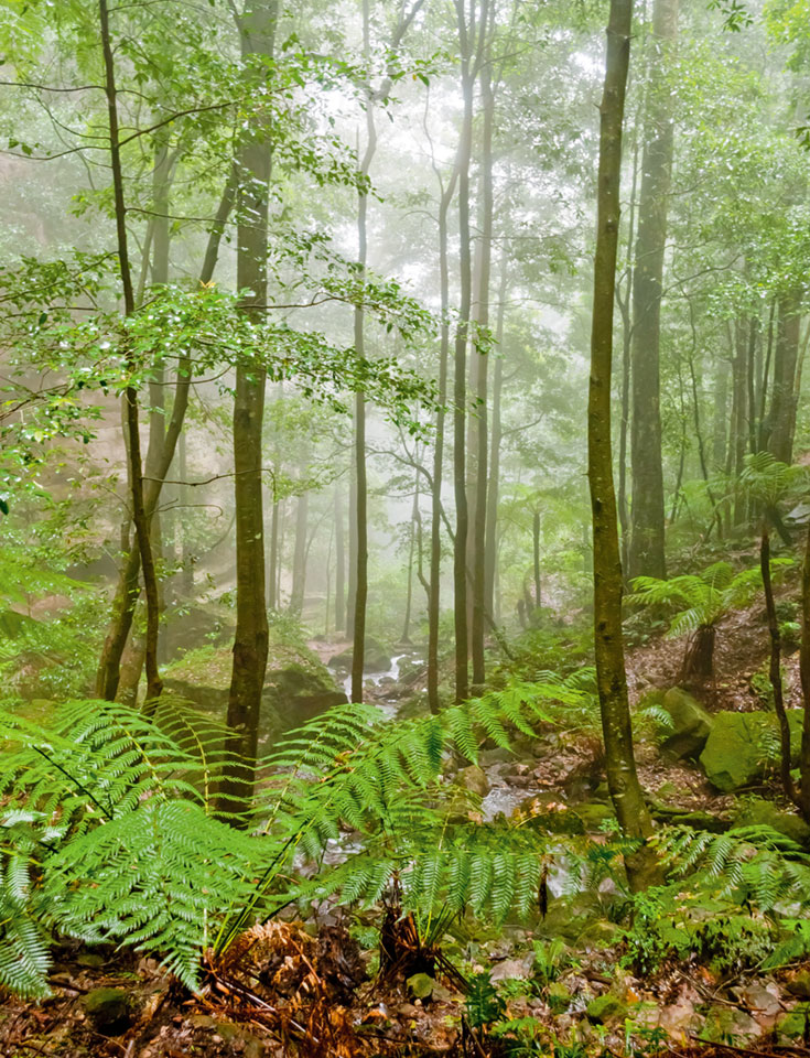 A healthy forest, lot's of green and misty water.