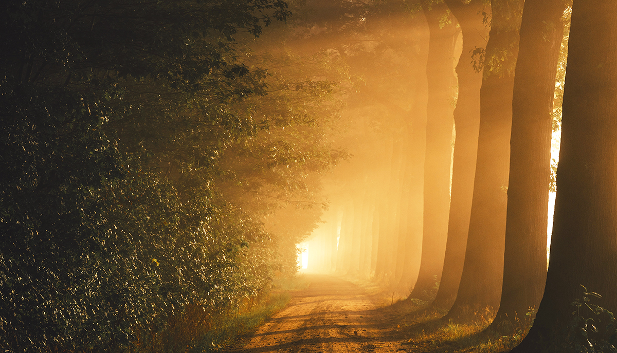 An empty road with orange lighting and tall trees.