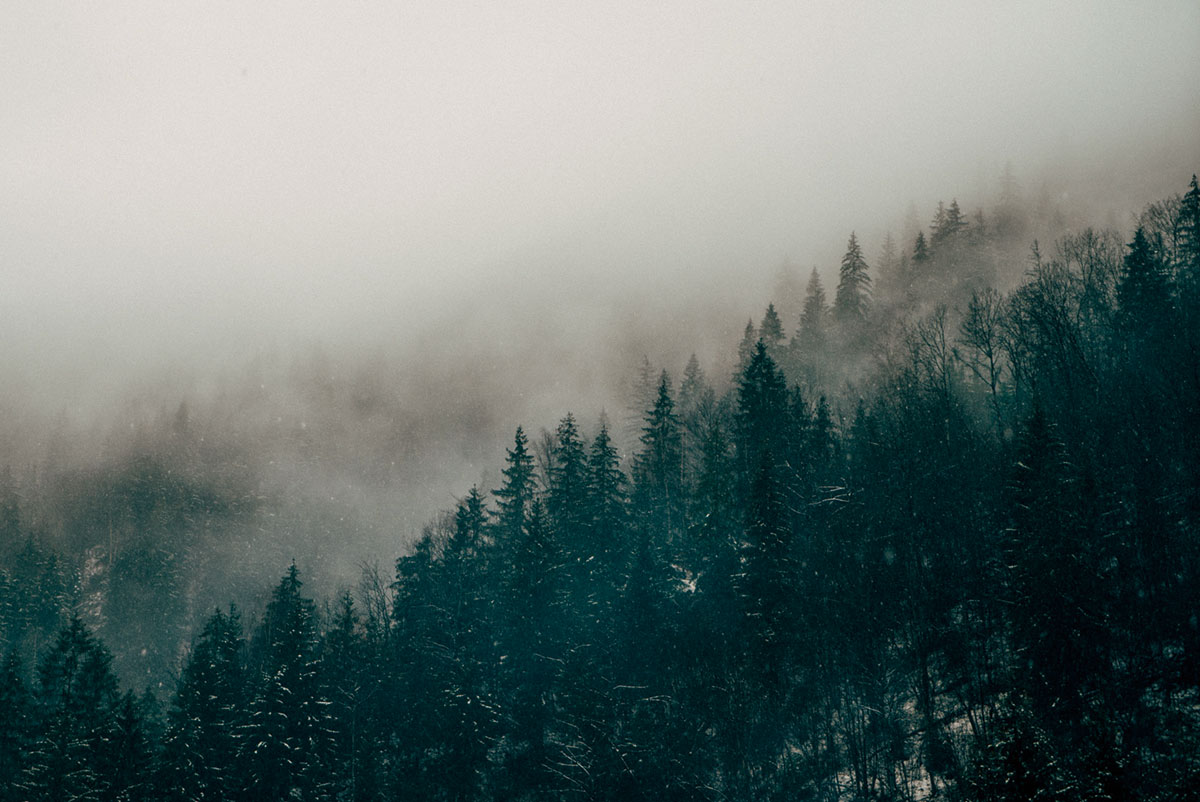 Trees on a foggy day in the mountains.