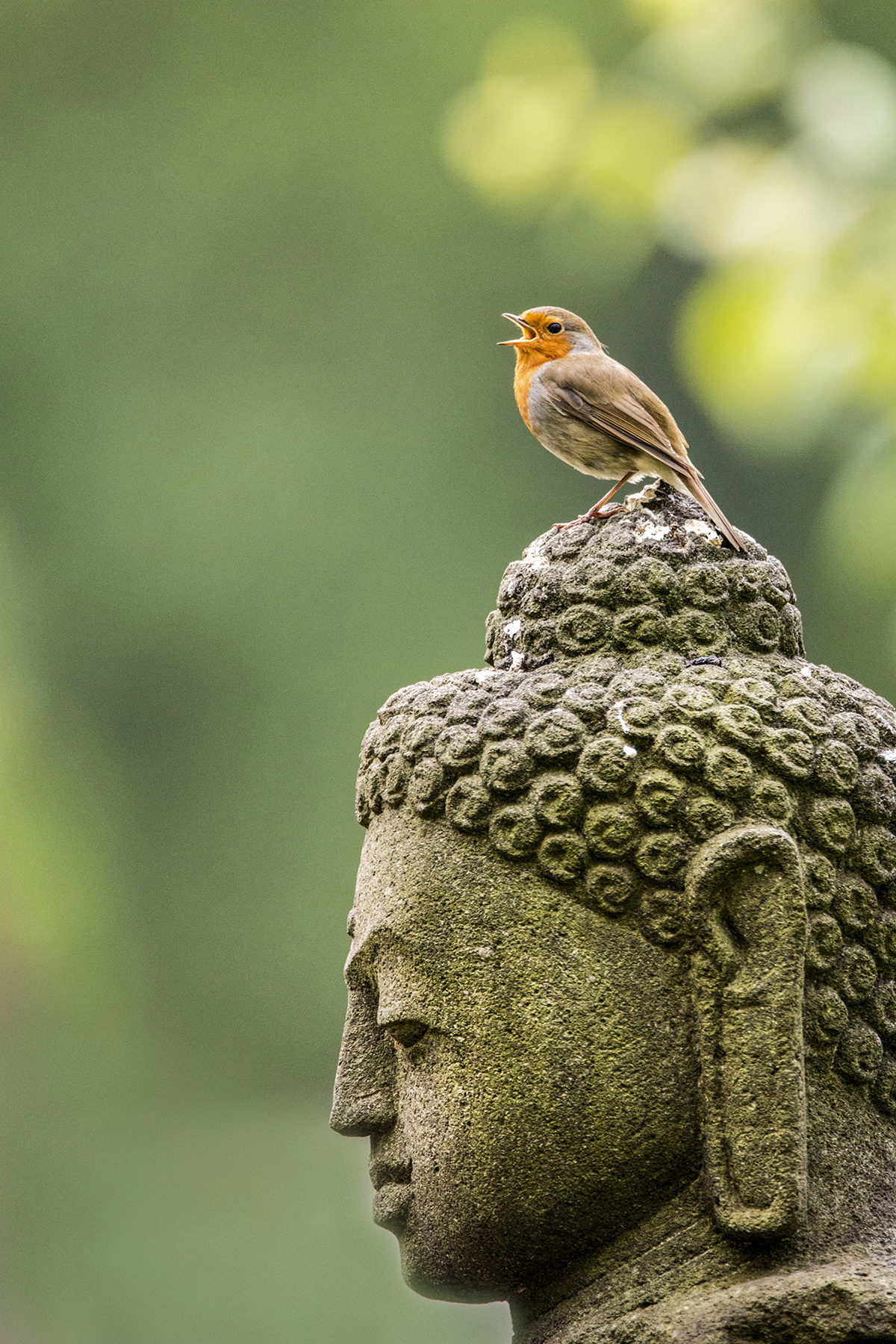 A bird sitting on top of a statue.
