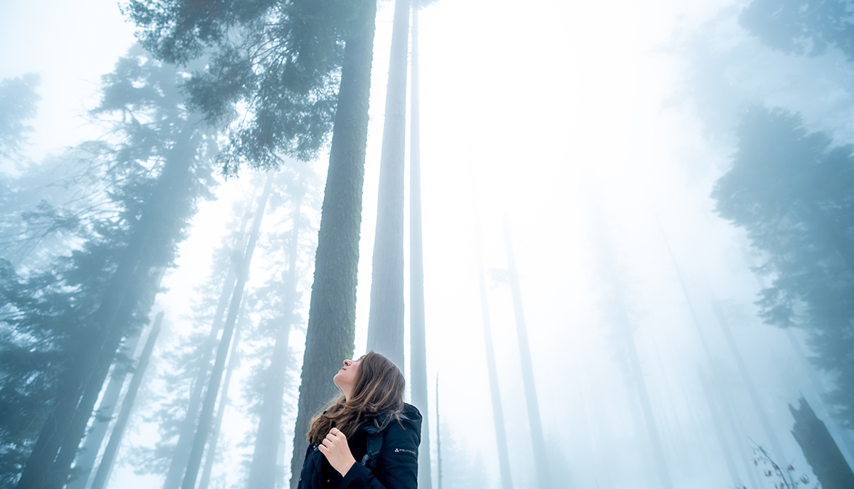 A woman in a forest. There is blueish lighting and very tall trees.