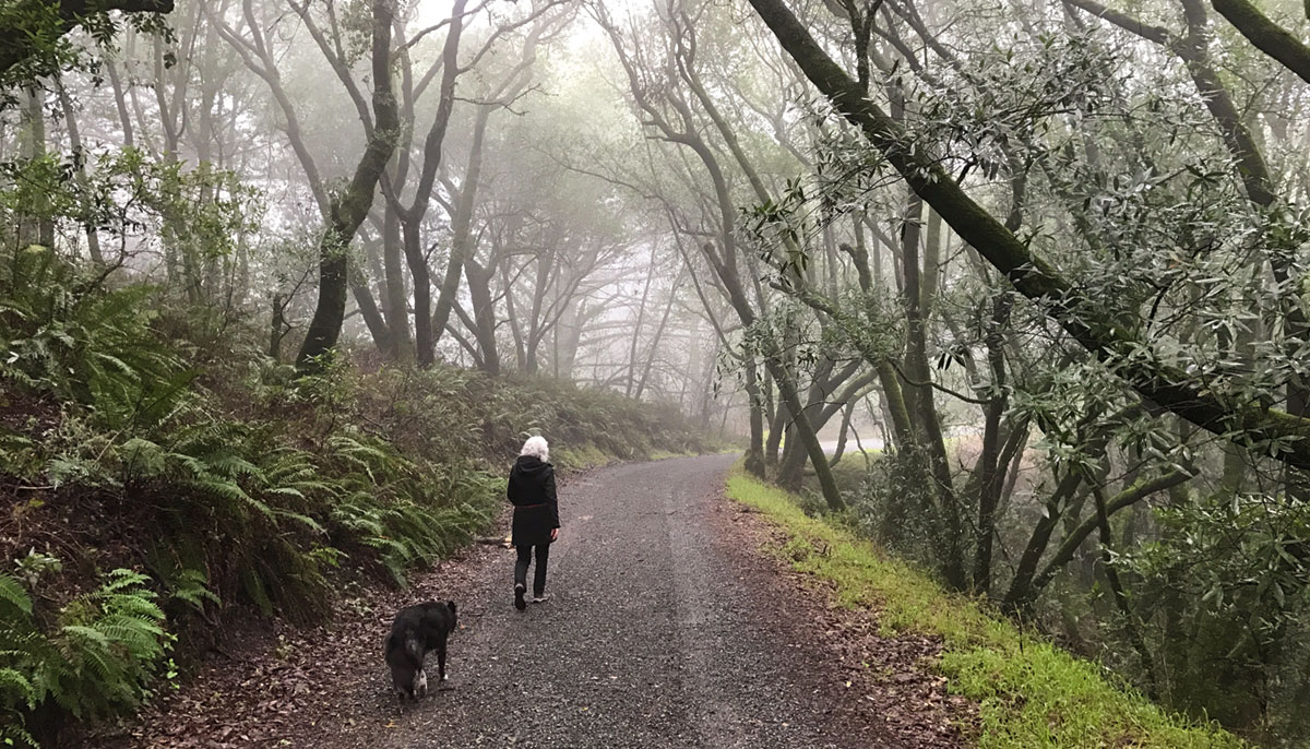 A woman walking down a path in the forest. A dog walks behind her.