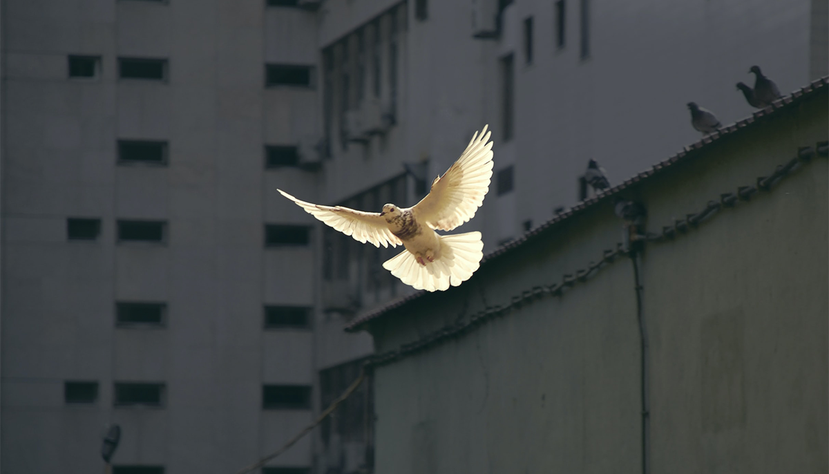 A bird flying by a building.