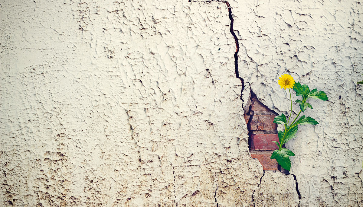 A flower growing out of a crack in the wall.