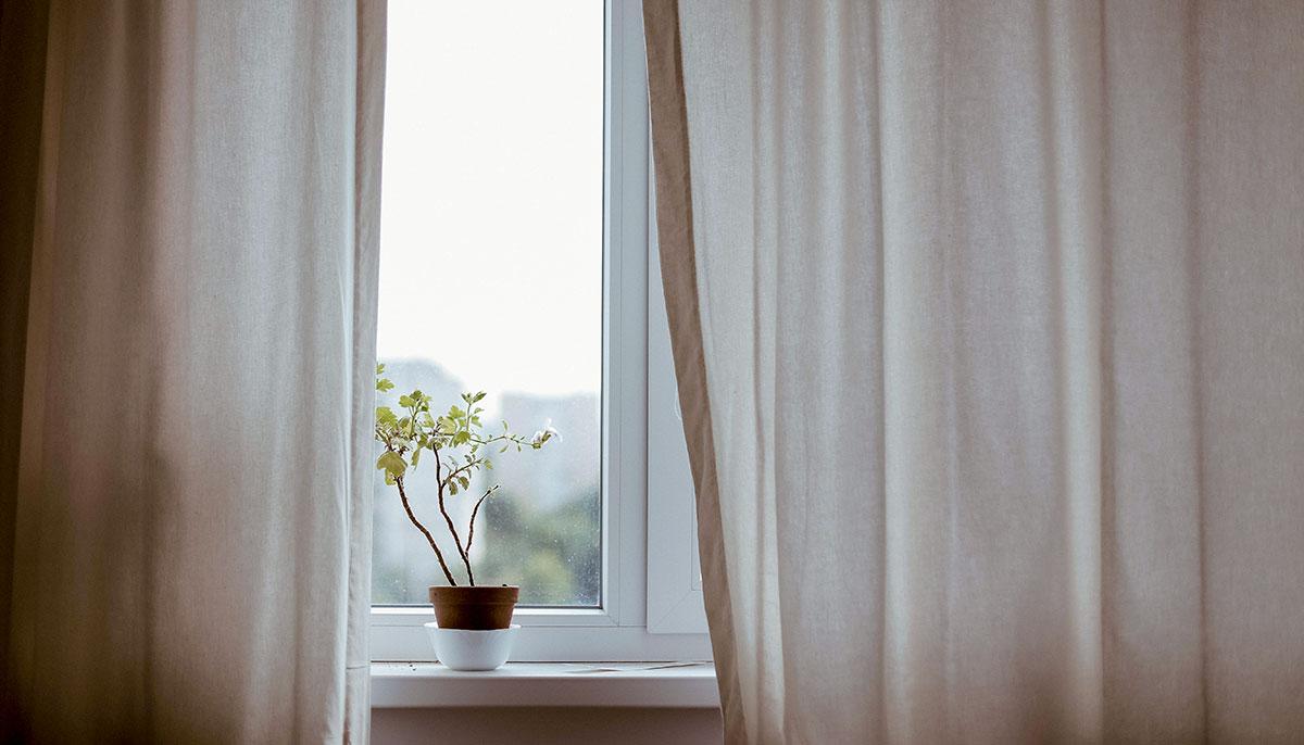 Una planta en el alféizar de una ventana con cortinas ondeando.