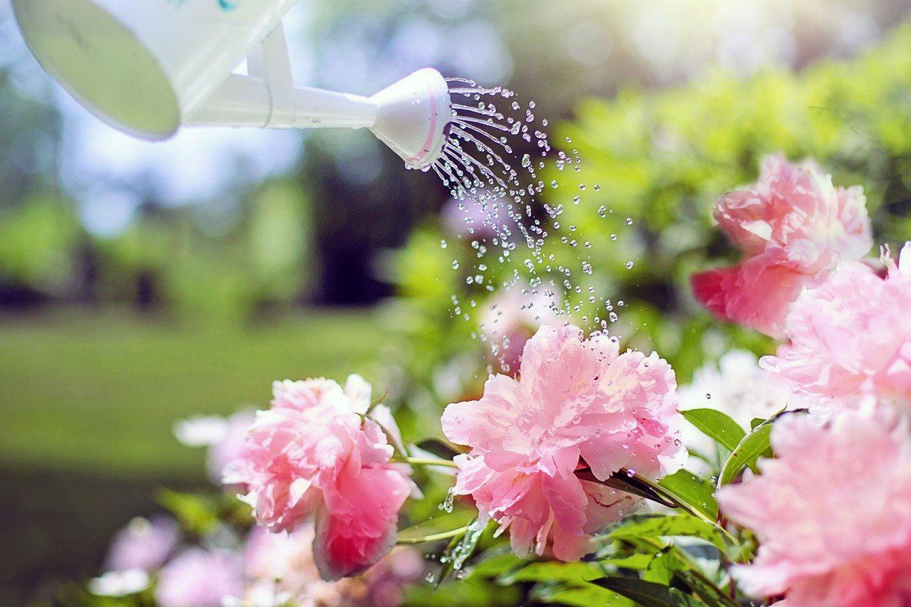 Watering can watering flowers.